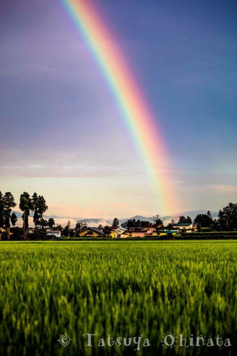 田んぼと虹