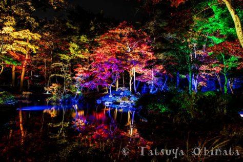 池田氏庭園の紅葉ライトアップ写真