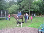Cookies on horse back 3