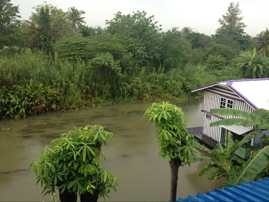 View from our terrace at PongPhen Guesthouse
