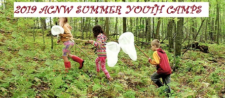 Kids catching butterflies at Audubon Center's summer camp