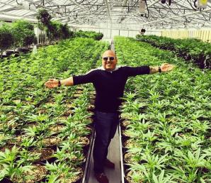 Andrew DeFrancesco in a sea of Aphria cannabis