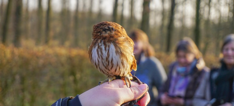 Winterse roofvogel demonstratie