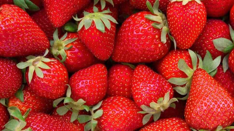 Strawberry could be the new new identity of jhansi, know the details | New  identity! Jhansi की नई पहचान बनेगी Strawberries की खेती, जानिए रोडमैप |  Hindi News, देश