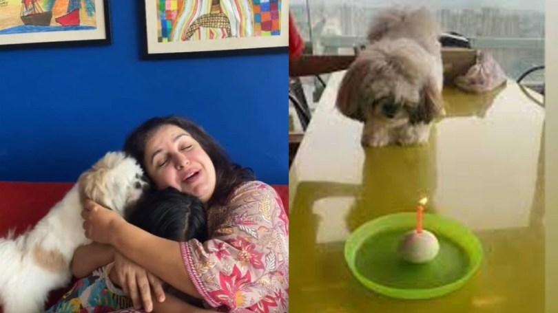 Farah Khan Celebrated her Pet Birthday, Video Gone Viral On Social Media    Farah Khan celebrates her dog's birthday, your eyes will be stuck on the cake