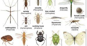 कीड़ों के बारे में 20 मज़ेदार रोचक जानकारी और तथ्य