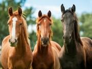 घोड़े से जुड़े 20 रोचक तथ्य जो शायद ही आपने पहले कभी पढ़े हो