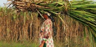 यहाँ गन्ना और ग़रीबी निगल रही हैं हज़ारों औरतों की कोख़