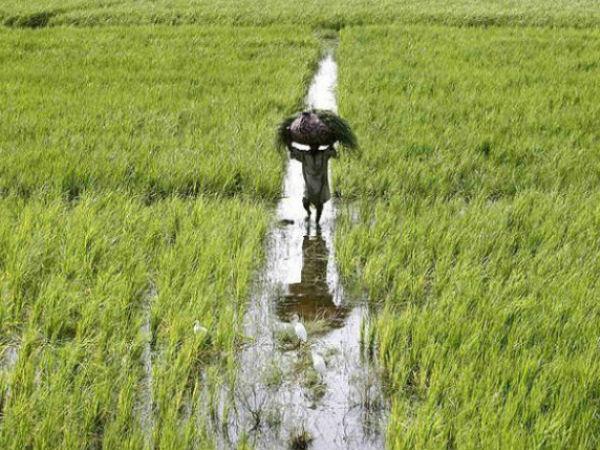 फसलों को कुदरती कहर से बचाने के लिए शुरु हुई योजना