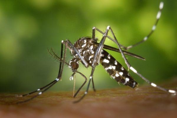 dengue cases in india