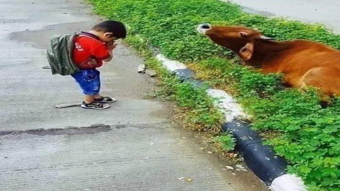 पशुपालन से क्यों टूटा नाता?