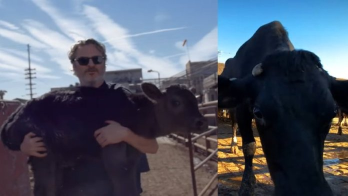 वॉकीन फीनिक्स, गाय
