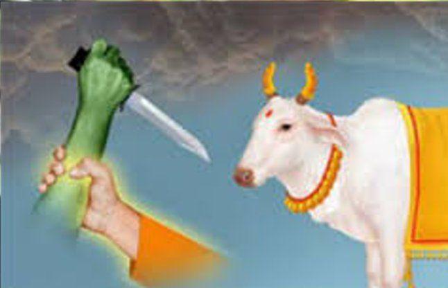 राजस्थान गौ हत्या