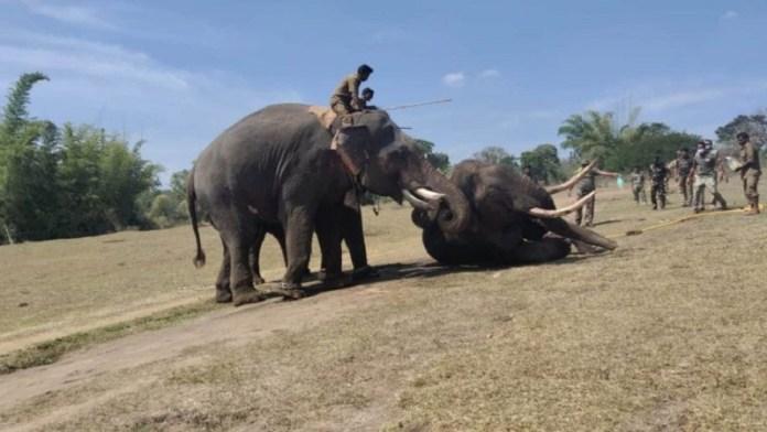हाथी पर जलता कपड़ा फेंकने से मौत