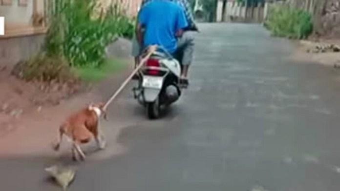 केरल कुत्ता जेवियर