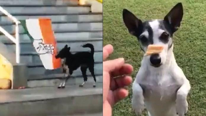 गाँधी कुत्ता कॉन्ग्रेस असम