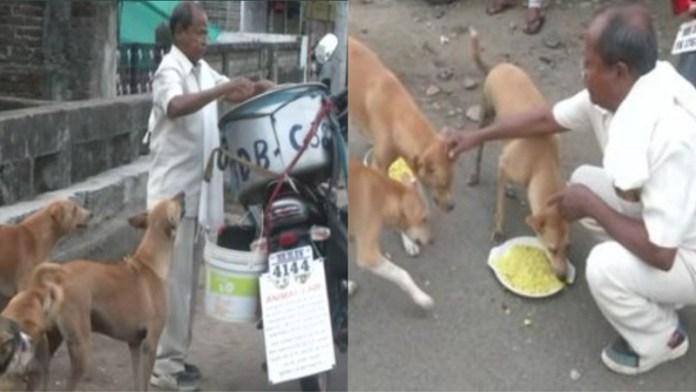 नागपुर, रंजीत नाथ, आवारा कुत्ता