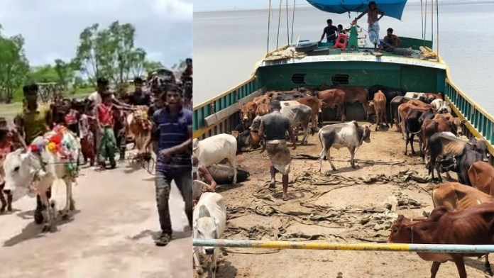 बांग्लादेश, रोहिंग्या, बकरीद, गायों