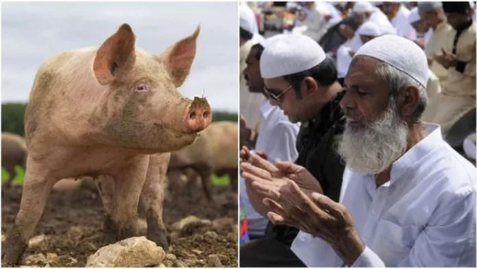 सूअर बलि मुस्लिम विरोध
