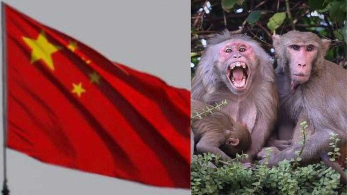 चीन मंकी बी वायरस