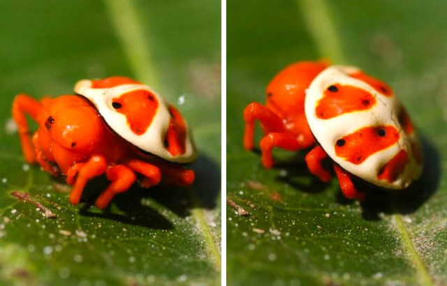 20+ Times Nature Got a Little Bit Distracted When Creating Animals