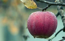 1 सेब में प्रोटीन की मात्रा कितनी होती है?