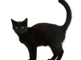 black billi