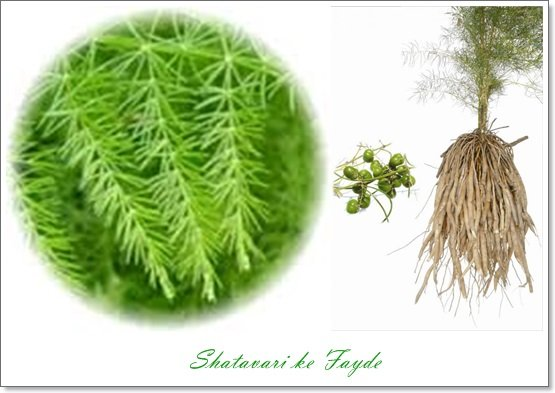 shatavari benefits