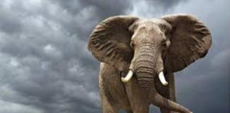 elephant dream meaning in hindi