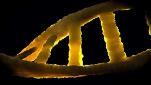 Read more about the article Genetics का हिंदी मतलब क्या है,परिभाषा(About Genetics meaning in hindi)