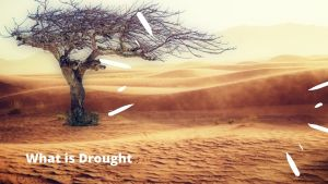 Read more about the article What is Drought, Meaning, Definition, Effect of Drought, types of Drought