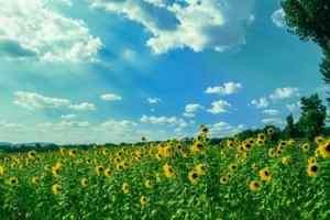 Spring Season Essay in Hindi वसंत ऋतु पर निबंध