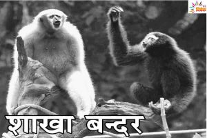 Read more about the article शाखा बन्दर