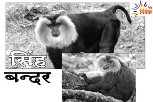 Read more about the article सिंह बन्दर