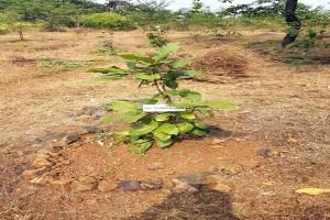 Read more about the article विवेक पर्यावरण समिति का वृक्षारोपण में योगदान