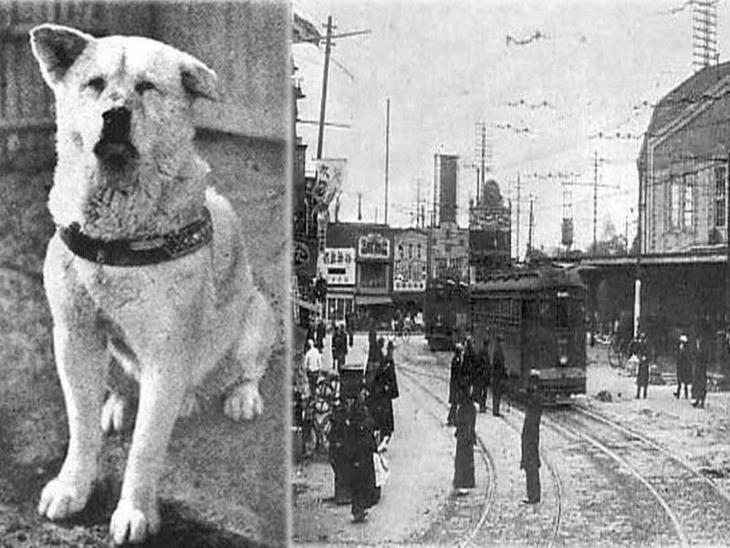 रुला देगी इस वफादार कुत्ते हचीको की कहानी, यकीन न हो तो देखें ये वीडियो