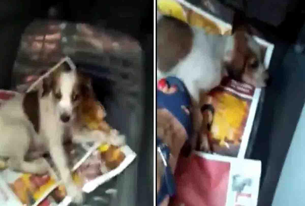तहजीब के शहर लखनऊ में क्रूरता की सभी हदें पार, कुत्ते के बच्चे को सैंडिल से कुचलकर मार डाला, वीडियो वायरल