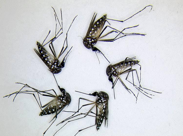 मच्छरों से हैं परेशान इस घरेलू उपाय से तुरंत मिलेगा लाभ
