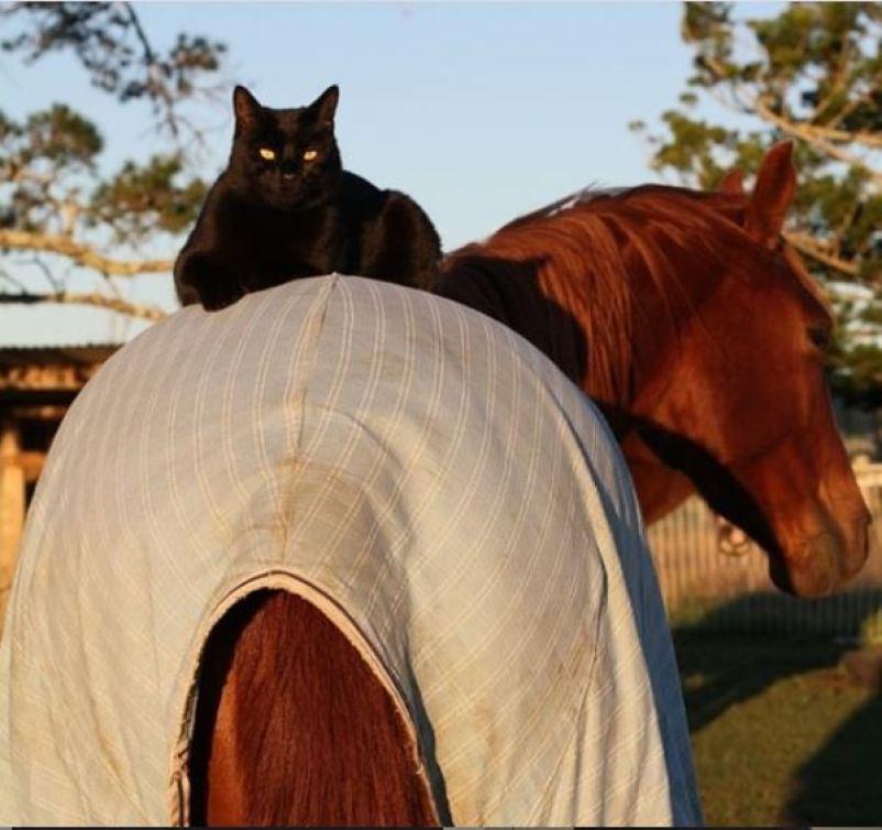 दोस्ती की मिसाल हैं ये बिल्ली और घोड़ा, 7 वर्षों से हैं एक दूजे के साथ