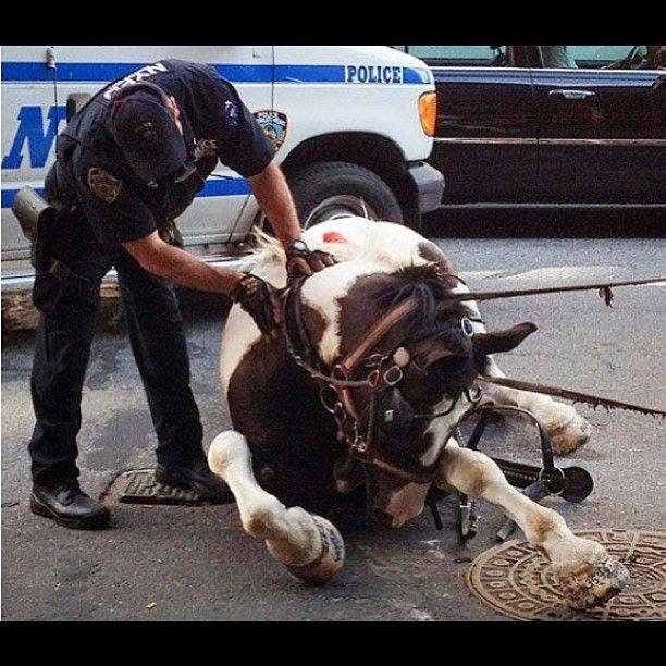 इंसान बन गया अंधा, घोड़े लाद दिया 2500 किलो सरिया जिसकी आंखे भी फूटी हुई थी