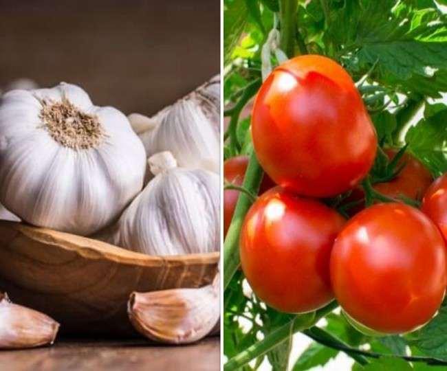 Garlic Price: प्याज और सब्जियों के दाम में आई भारी गिरावट तो लाल हुआ टमाटर, जानिए क्या है लहसुन की नई कीमत