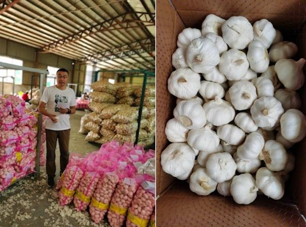 Garlic Price: प्याज के कीमतों में आई गिरावट के बाद अब लहसुन भी हुई सस्ती, जानिए क्या हैं अब नये भाव