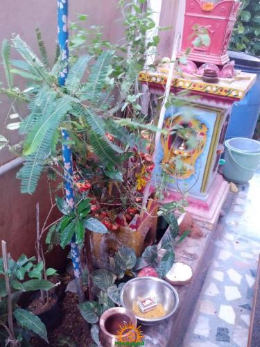 Tulsi Vivah image