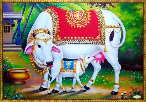 Gudiko Gomata program by TTD cow calf