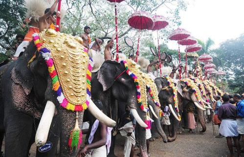 Temple Elephants in Kerala