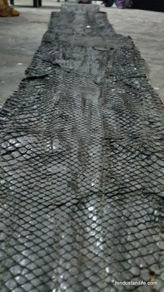 Snake Skin - Varnished for preservation