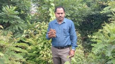 Koraput's Wild CropsPossess Immense Potential forNutritional Security & Health Benefits