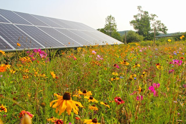 A variety of plants that promote pollination at Magee Hill, photo courtesy of Bee the Change