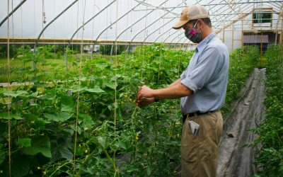 Trillium Farm's CSA Sales Grow, spurred by COVID-19