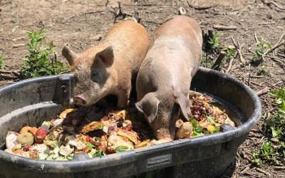 Creekside Community food scrap pick-up takes off